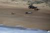 Salvamento de surfista confirmou a eficácia do sistema de salvamento sempre a postos na Nazaré (®PraiaDoNorte)